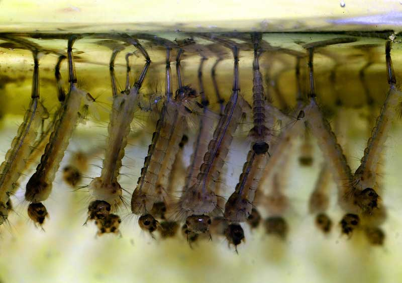 Корм для рыбок из бочки на огороде