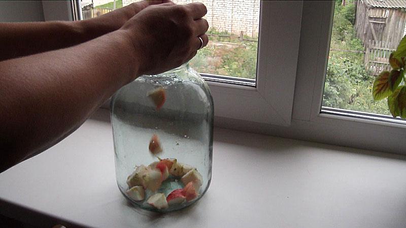 Корм для рыб плодовая муха