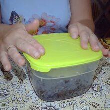 Как защитить гриндальского червя от вредителей