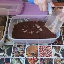 Гриндальский червь: перезапуск на свежий субстрат