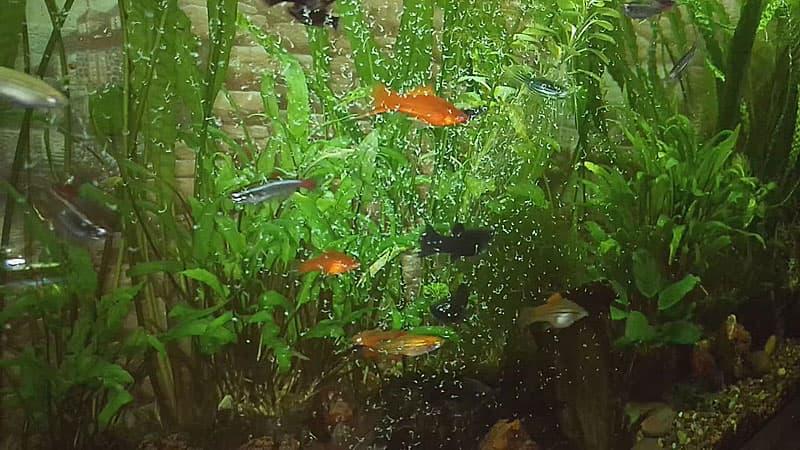 Смешанный корм для рыб аквариумных
