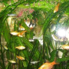 Корм для рыб аквариумных