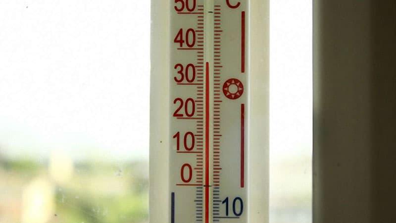 Живые корма: температура и транспортировка
